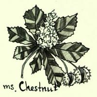 Ms. Chestnut Art