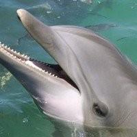 Kharkov Dolphinarium 'Nemo'